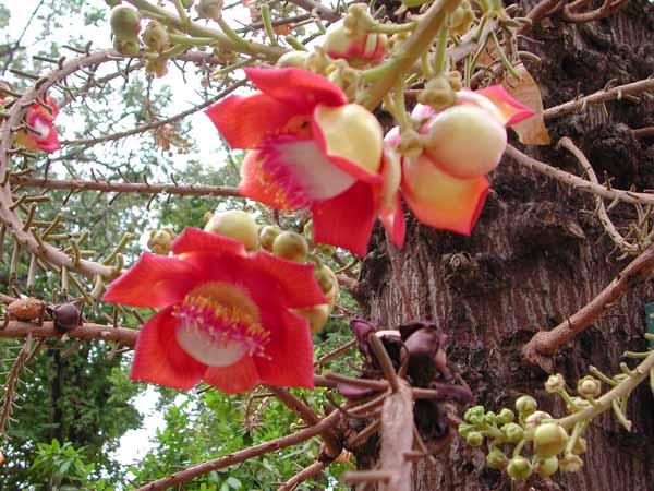 梦见树上开满红花